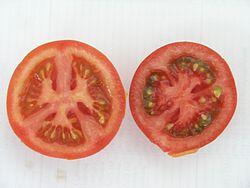 Tomatenormalundextrarot.jpg
