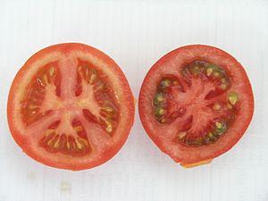 neue Tomatensorte extra rot mit viel Lycopen