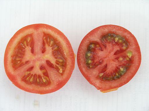 Tomatenormalundextrarot