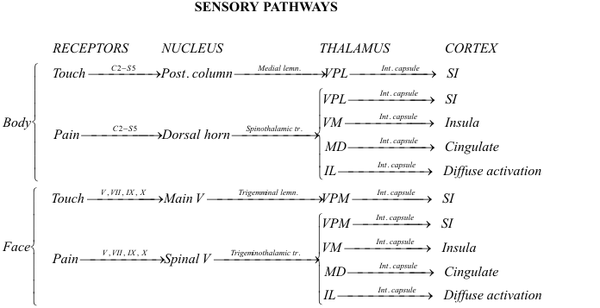 Text-and-line diagram of sensory-nerve pathways