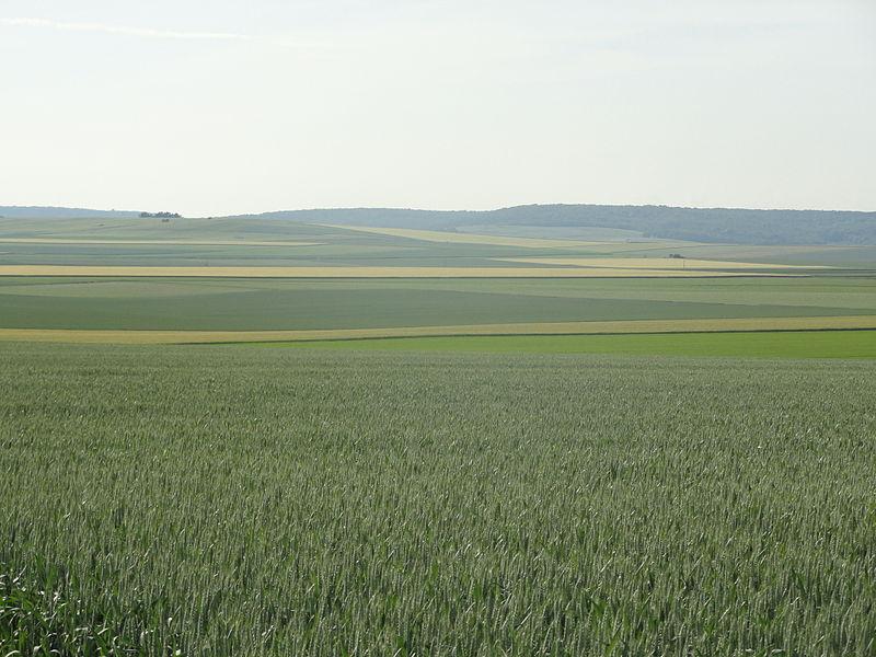 Vue de la plaine au nord de Tours-sur-Marne avec au fond la Montagne de Reims.