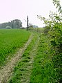 Track and Hedge at Stanford Bury - geograph.org.uk - 400432.jpg