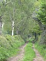 Track with birches - and rabbit - geograph.org.uk - 422657.jpg