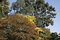 Tree Tops, Batsford Arboretum - geograph.org.uk - 1527772.jpg