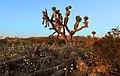 Tree Trunk (14251638596).jpg
