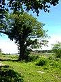Tree and marshland - geograph.org.uk - 851942.jpg