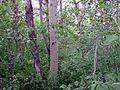 Trees - panoramio (8).jpg