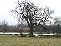 Trees and ponds - geograph.org.uk - 1712720.jpg