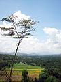 Trenggalek village view.jpg