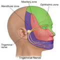 Trigeminal Nerve.png