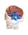 Trigeminal Neuralgia.png