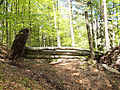 Triglav National Park - fallen tree.jpg
