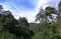 Turkish pines, Canyon Kapıkaya.jpg