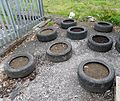 Tyre Vegetable Garden at Barrmill.JPG