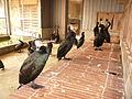 Ukai Gifu Nagaragawa U01.JPG