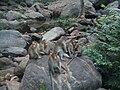 Unidentified Macaca.jpg