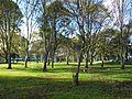 Universidad Nacional Bogotá Bosque de Ingeniería.JPG