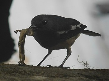 Unknown identity-bird with lizard.jpg
