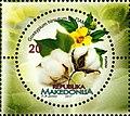 Upland Cotton (Gossypium hirsutum).jpg