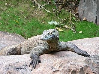 Parthenogenesis - Komodo dragon, Varanus komodoensis, rarely reproduces offspring via parthenogenesis.