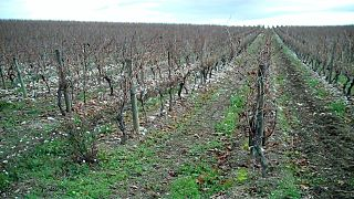 appellation d