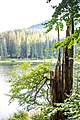 Veronika Leonets ID 21-224-5054 Синевир Національний природний парк Карпати.jpg