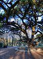 Very Old Tree - Parco del Popolo, Reggio Emilia, Italy - December 17, 2011 01.jpg