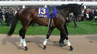 Victoire Pisa Japanese-bred Thoroughbred racehorse