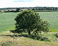 View from Little John - geograph.org.uk - 514034.jpg