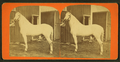 View of a white horse in Cardington, Ohio, by J. B. Clark.png