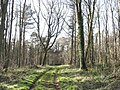 View west to the folly along the track in Coed Twr - geograph.org.uk - 366317.jpg