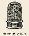 Vintage illustrations by Benjamin Fawcett for Shirley Hibberd digitally enhanced by rawpixel 27.jpg