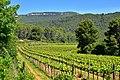 Vinyes de les Valls, Torrelles de Foix.jpg