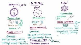 File:Viral hepatitis.webm