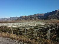 Vitrolles (Hautes-Alpes), vergers.jpg