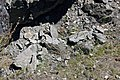 Volcanic tuff (Sonoma Volcanics, Upper Pliocene, 3.2-3.4 Ma; Calistoga Petrified Forest, Calistoga, California, USA) 20 (49092976337).jpg