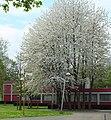 Vrije Universiteit Brussel on campus housing 03.JPG