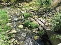 Vyžlovský rybník (011).jpg
