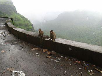 Waghjai Point; Varandha Ghat.jpg