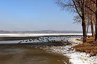 Waginger See, Anfang März 1.jpg