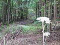 Wald - panoramio (7).jpg