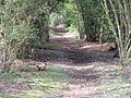 Walking companion on bridleway which runs parallel to A283 - geograph.org.uk - 1260075.jpg