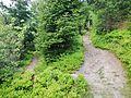 Wanderweg - panoramio (49).jpg
