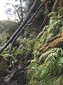Wangapeka Track - The track can be steep and indistinct.jpg