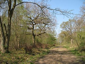 Waresley and Gransden Woods - Image: Waresleywood 3996