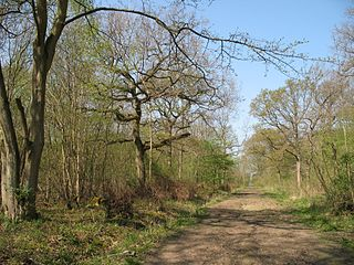 Waresley and Gransden Woods nature reserve in the United Kingdom