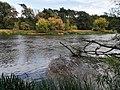 Warta River in Puszczykowo, autumn (2).jpg