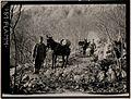 Wasser wird mittels Tragtieren auf den Monte Sabotino befördert (BildID 15732670).jpg