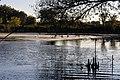 Wetland (6214061471).jpg