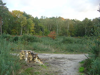 Weybridge - Weybridge Heath, showing scrub clearance area
